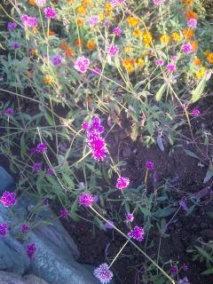 花が揺れる