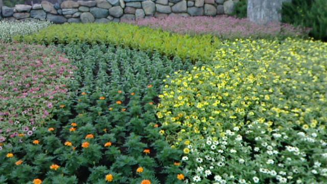 ザンビ横花壇
